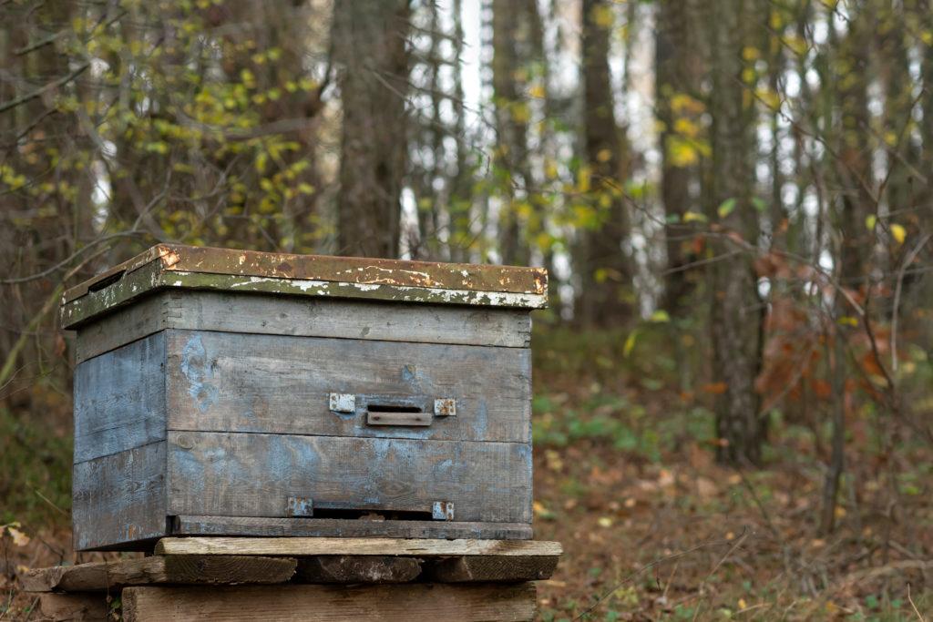 Maksika Honey shutterstock 1857117136